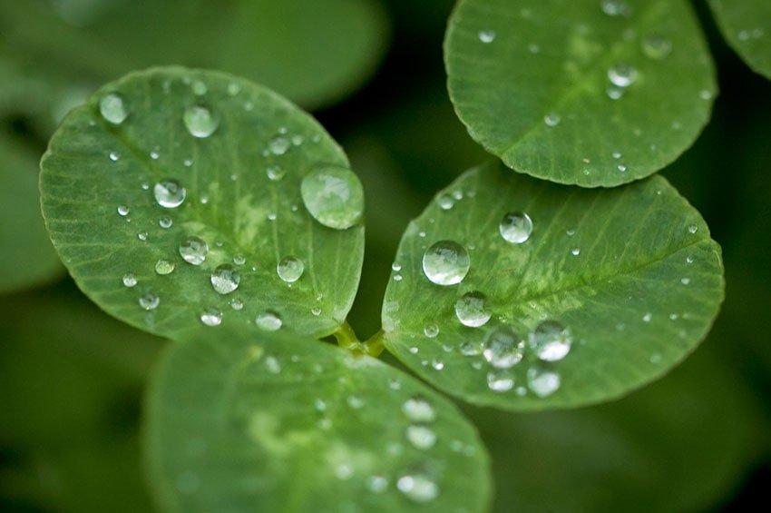 Macro Photography in the Rain