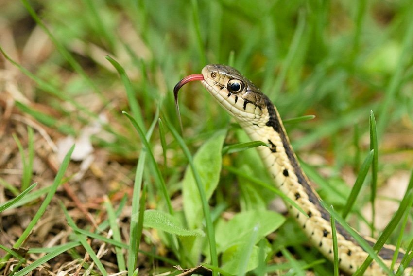 Macro Snake Photograph