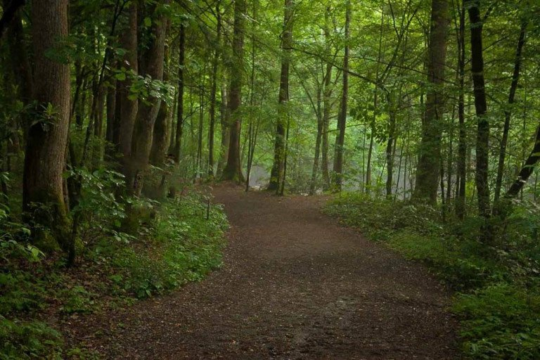 Take a Hike! | 5 Reasons Writers Should Get Out & Walk